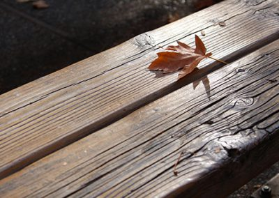 yosemite leaf