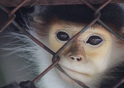 Monkey at Dusit Zoo